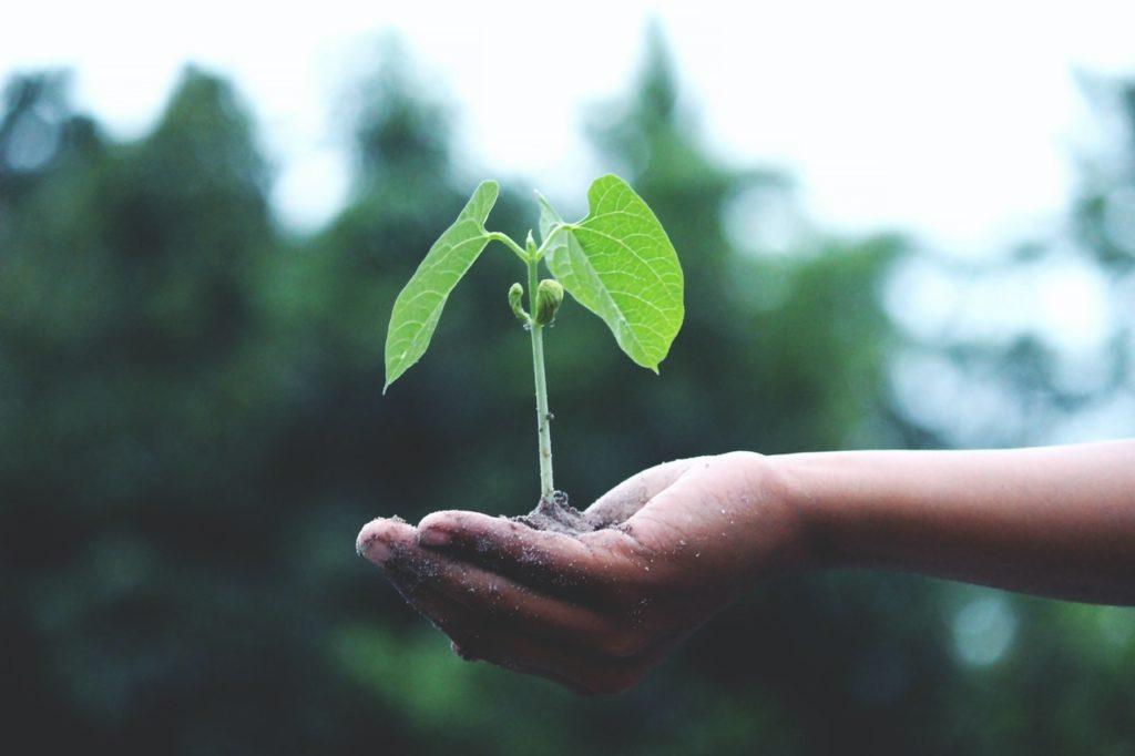 Baum pflanzen für Wärmepumpen-Projekt