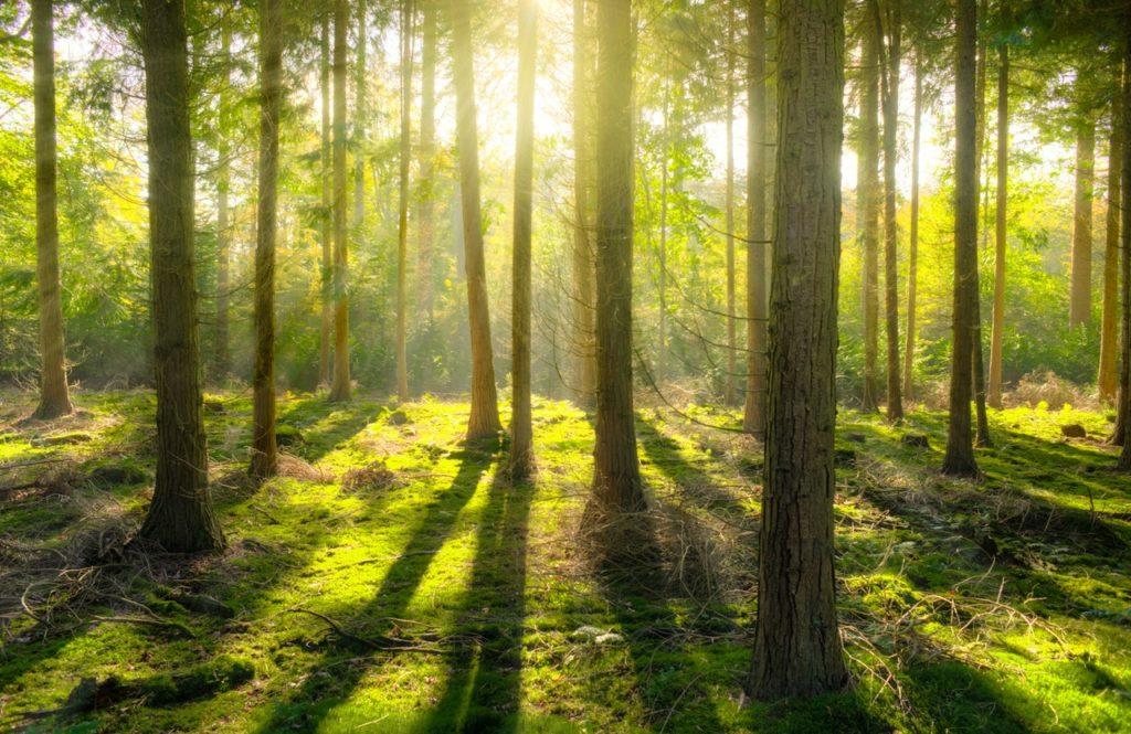 Bäume pflanzen für CO2 Reduktion